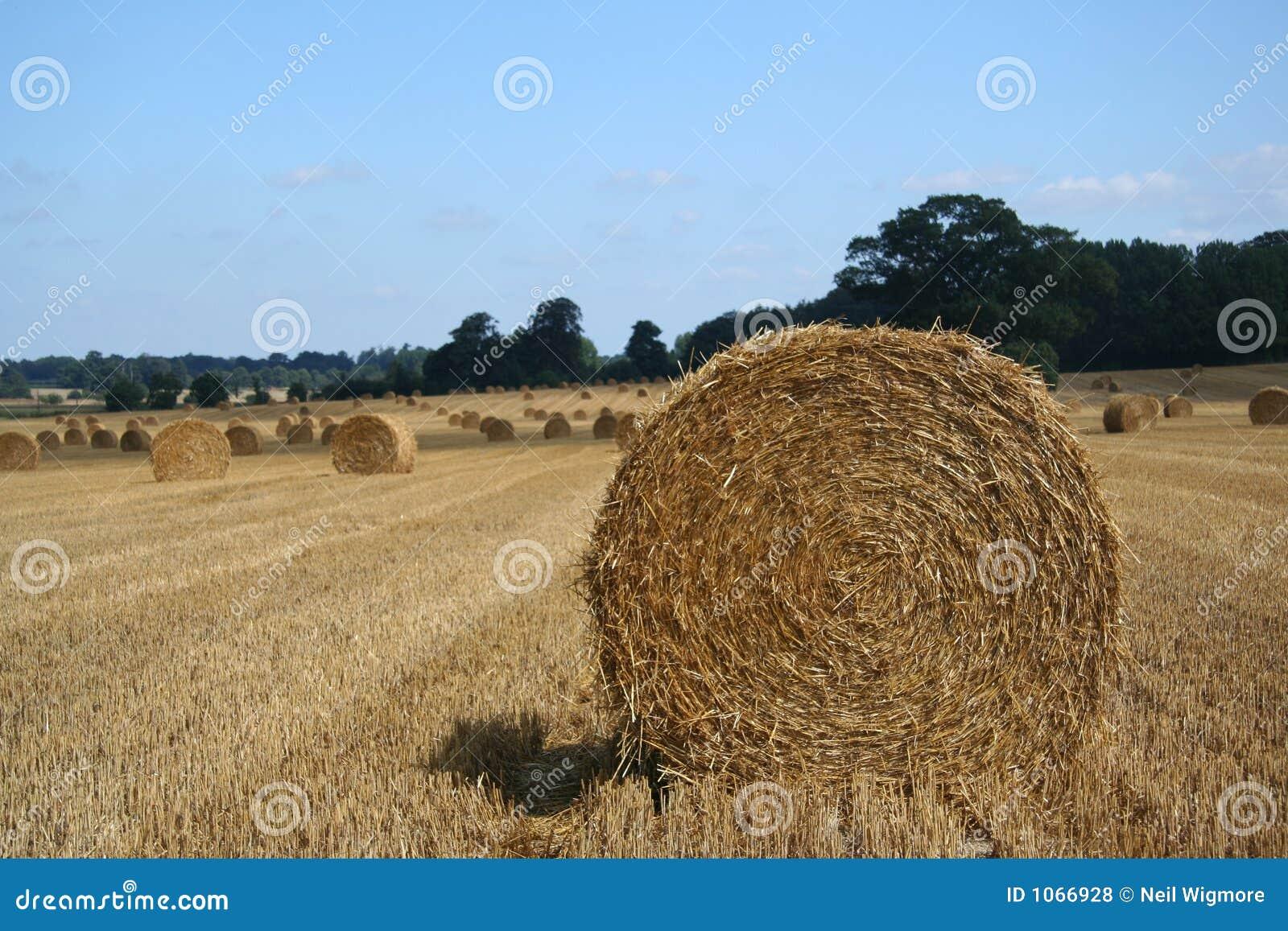 Straw Bale 2