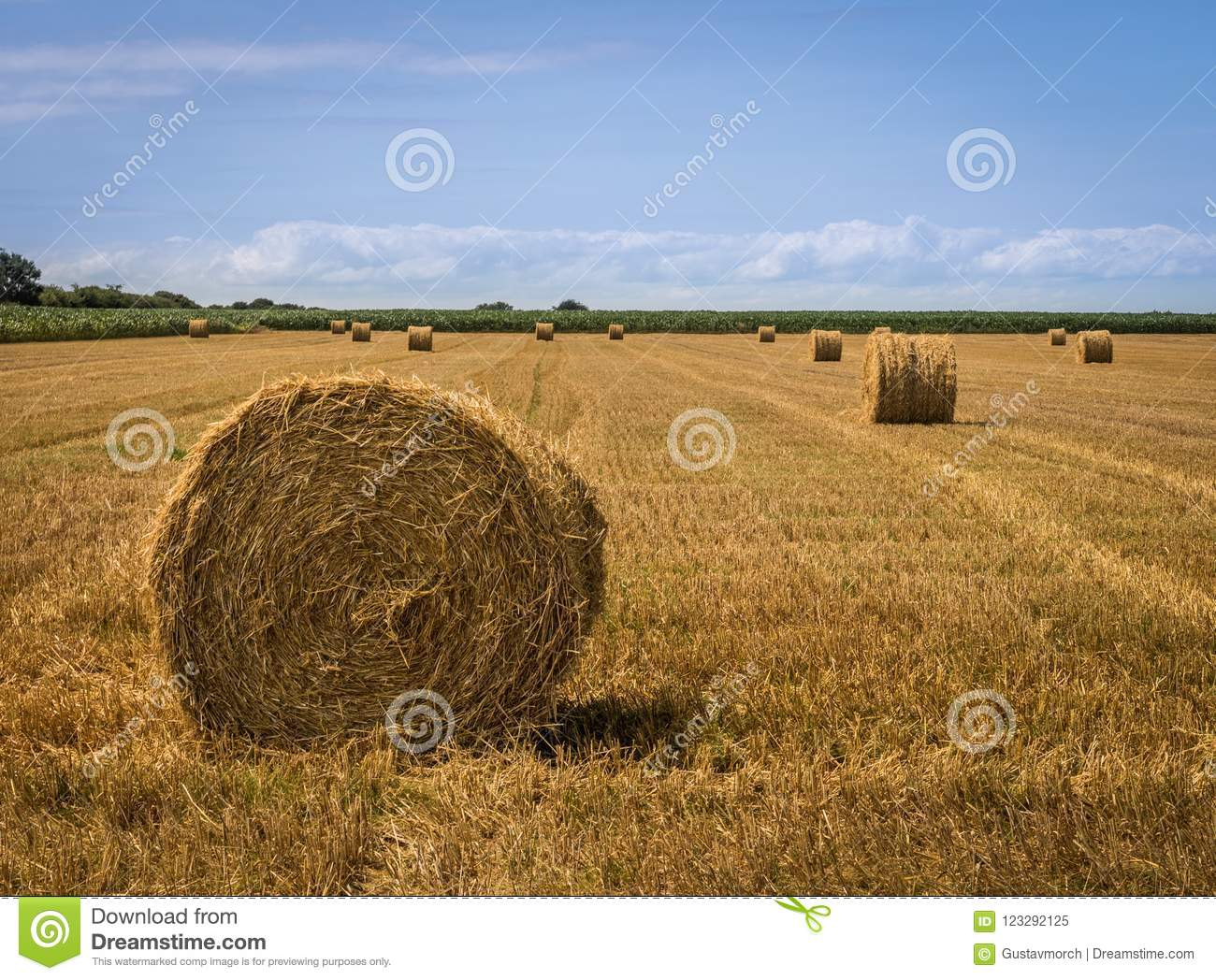 Straw bales at field after harvest
