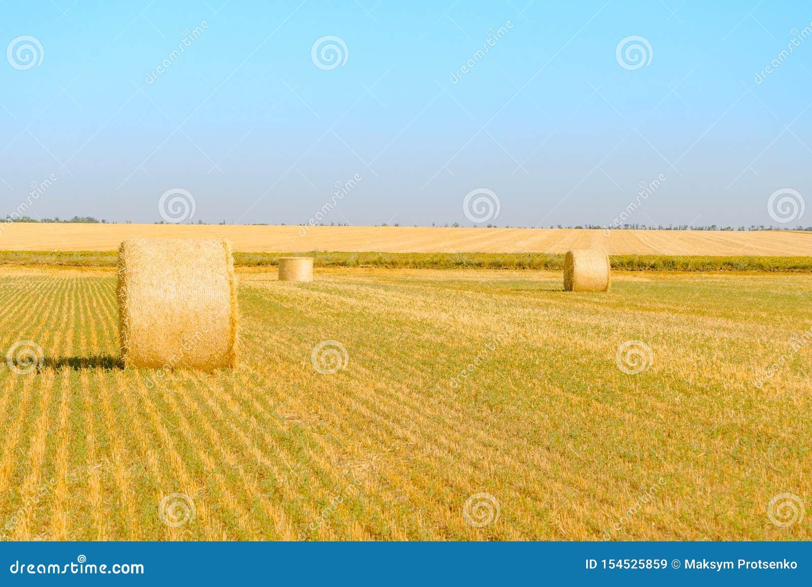 Straw Bales sur le champ jaune lumineux sous le ciel bleu