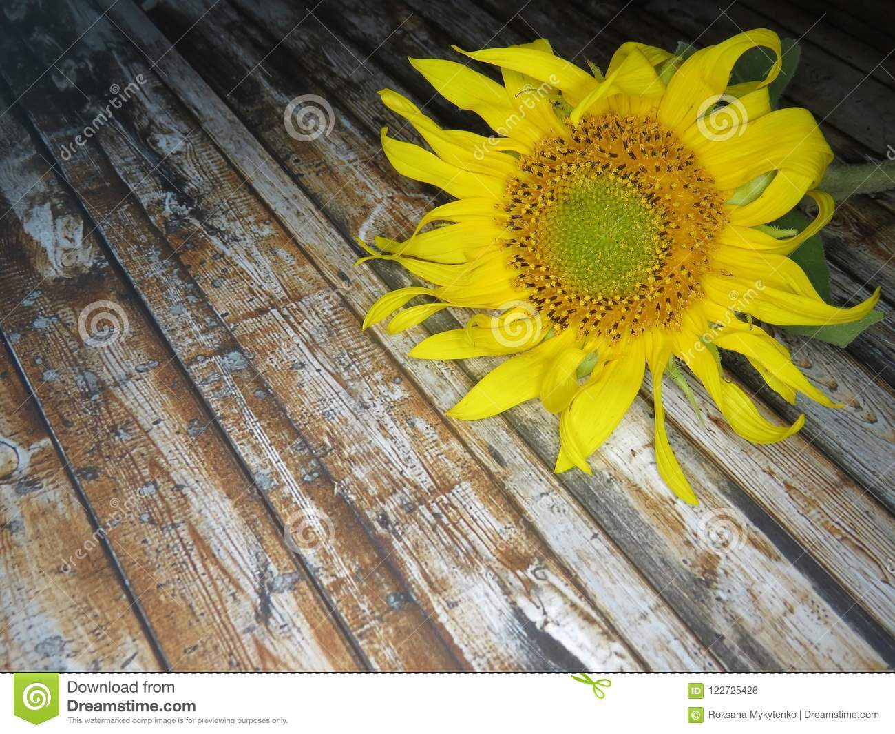 Straw Hat sunflowers on the table