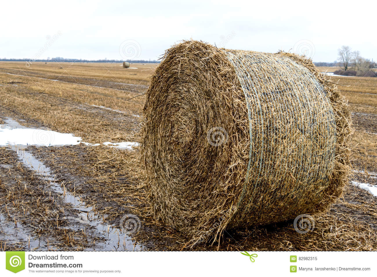 The straw left on the field after the grain harvest, the formation of the dense rolls for use as a fuel, the production of pellets