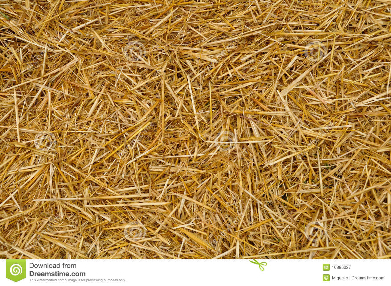 Download Straw texture stock image. Image of foliage, background - 16886027