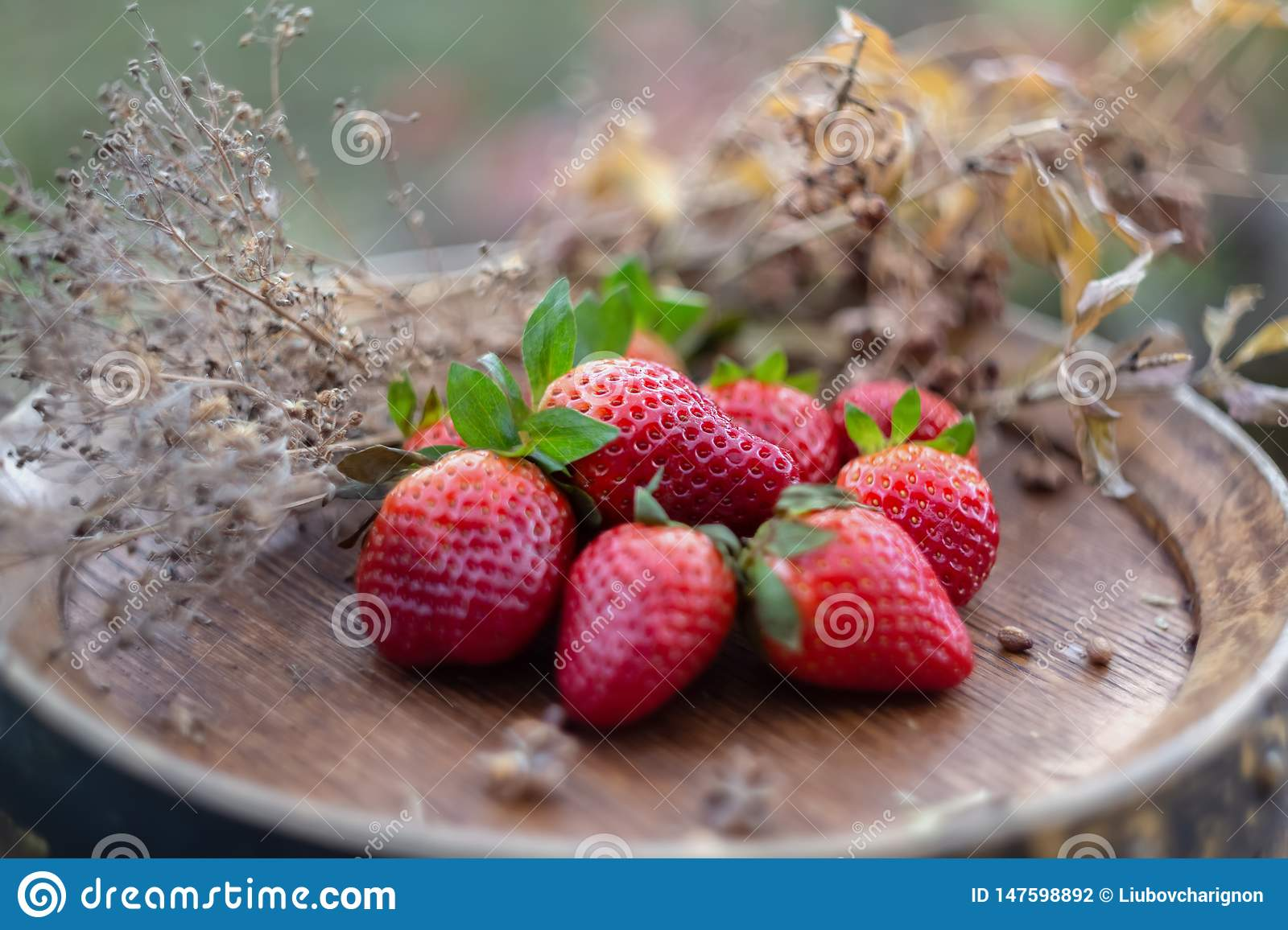 Strawberries on a wine wooden barrel in orchard in summertime. Red fruits