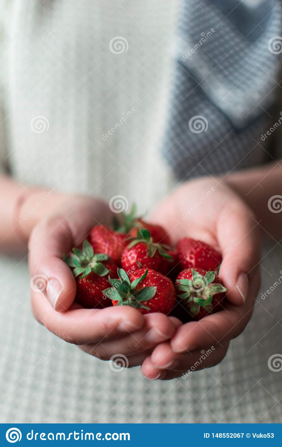 Strawberries in the woman`s hands.