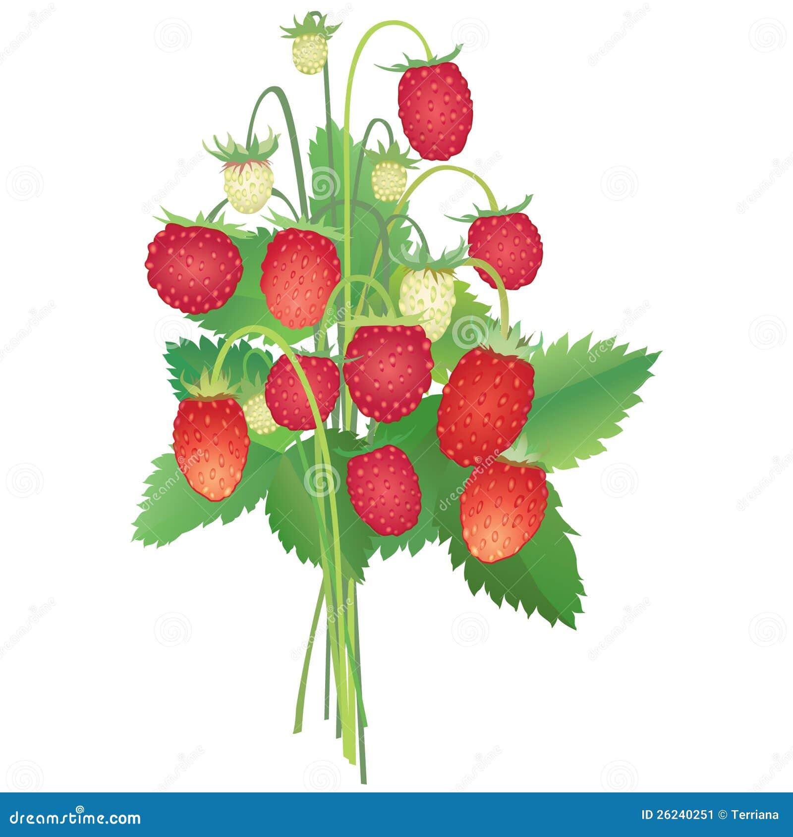 Strawberry Bouquet Stock Image Image 26240251