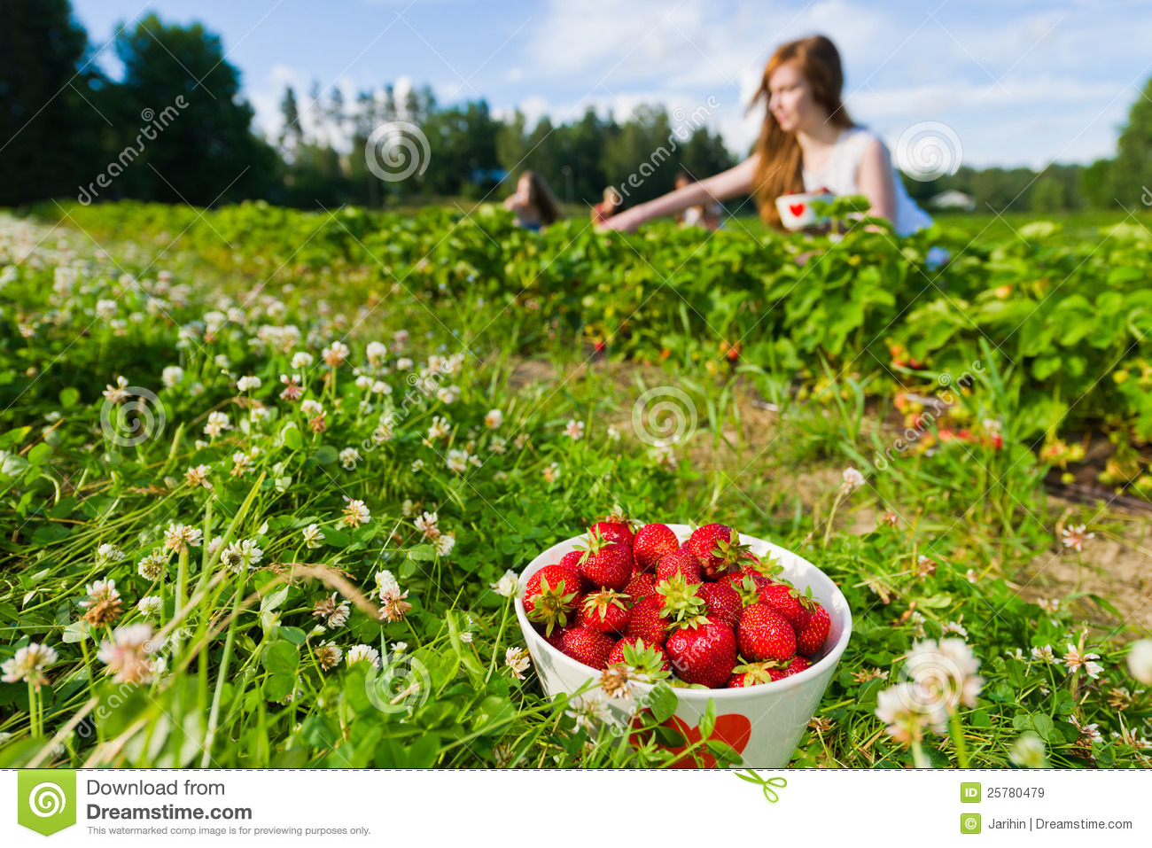 Strawberry Field Clipart strawberry field royalty free stock images ...