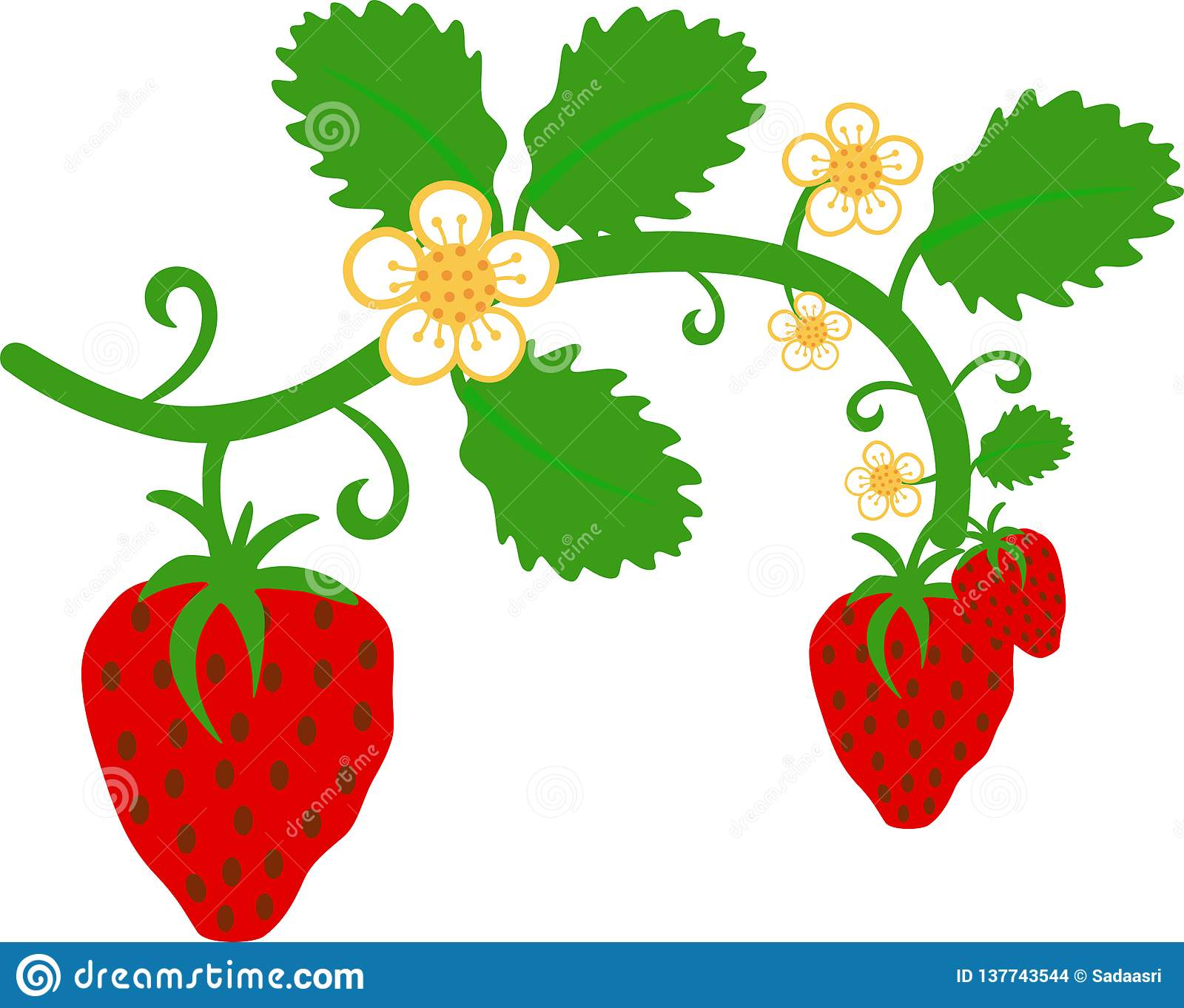 Strawberry with leaves ,stem and flowers