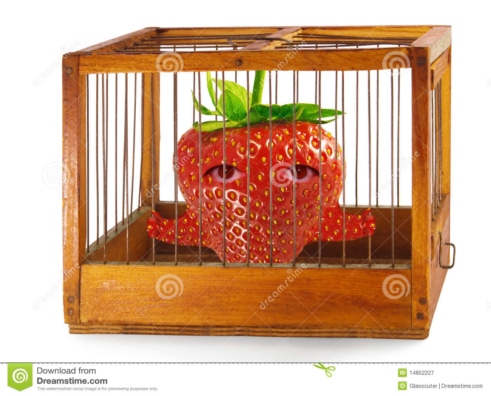 Strawberry, prisoner in the cage.