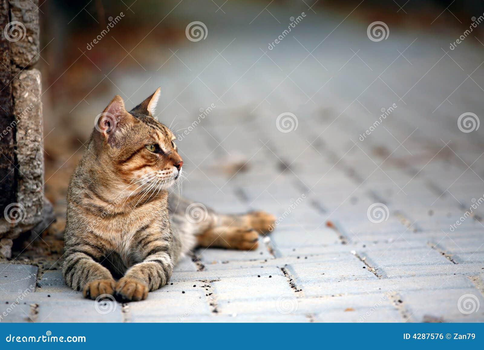 fainting kitten