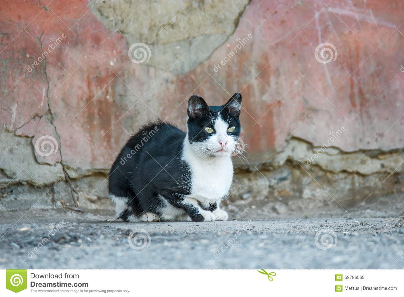 Cute Black And White Kitten Outdoors Royalty-Free Stock ...