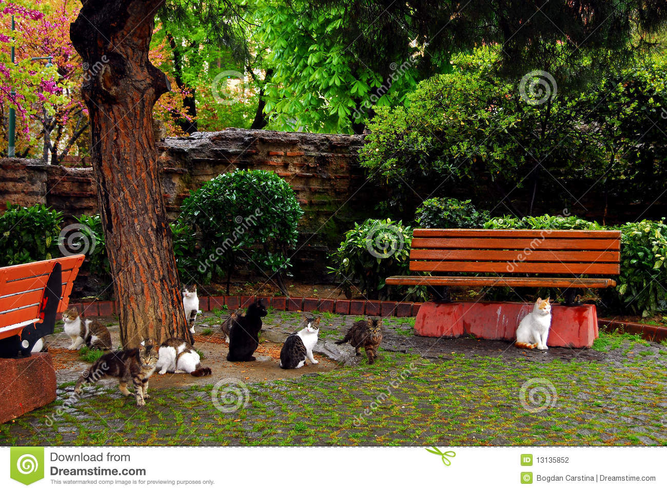 Stray Cats In Istanbul Park Stock Photography Image