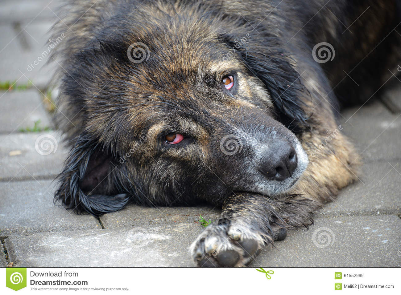 Stray Dog Stock Photo - Image: 61552969