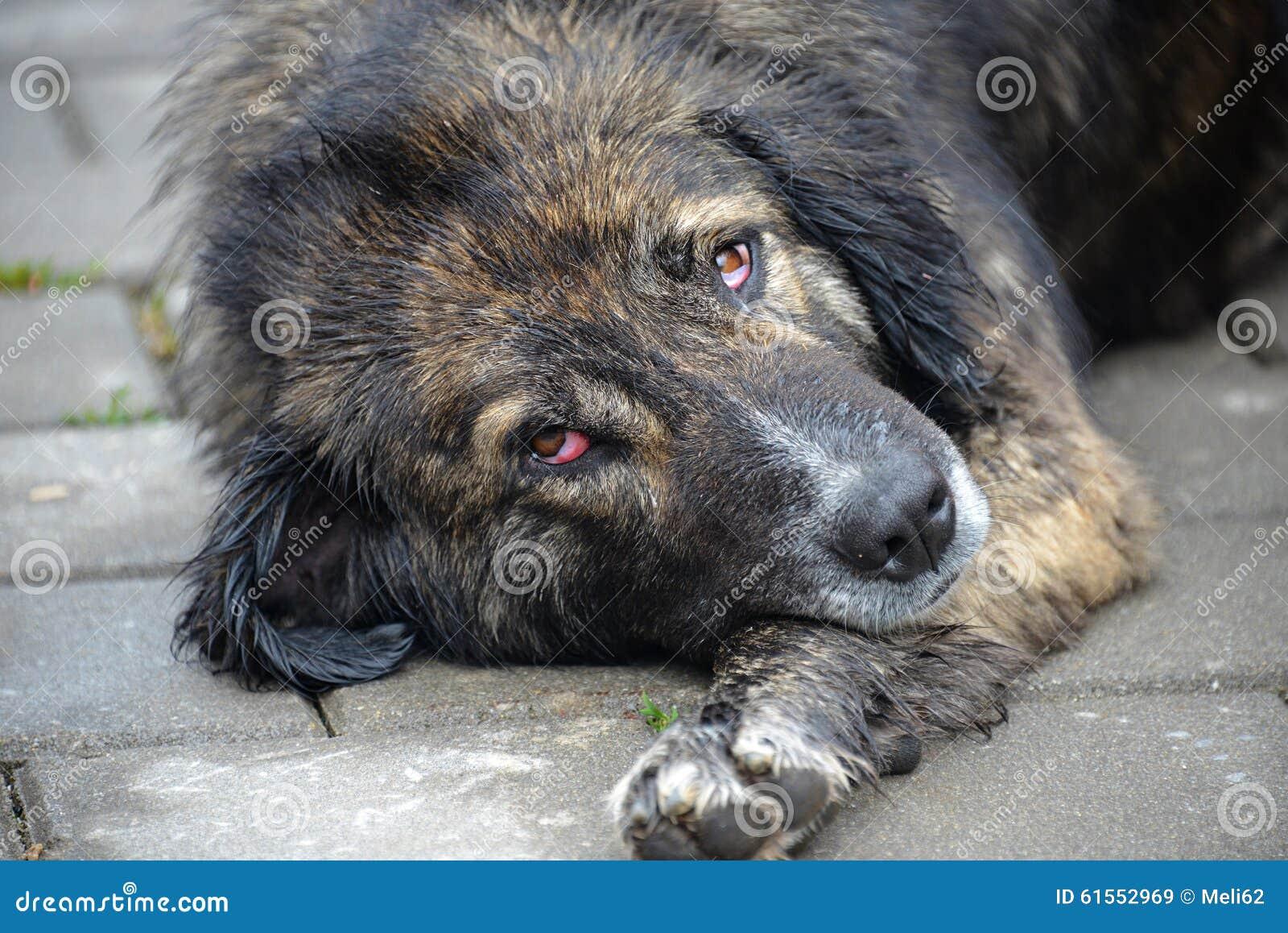Stray Dog Stock Photo - Image: 61552969