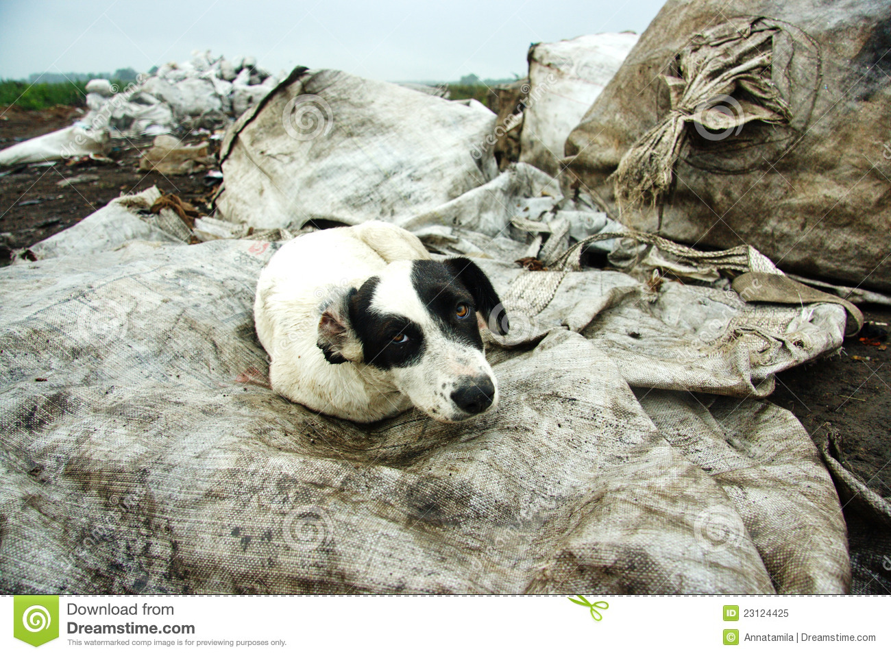 The Stray Dog at Dump Royalty Free Stock Photo - Image ...