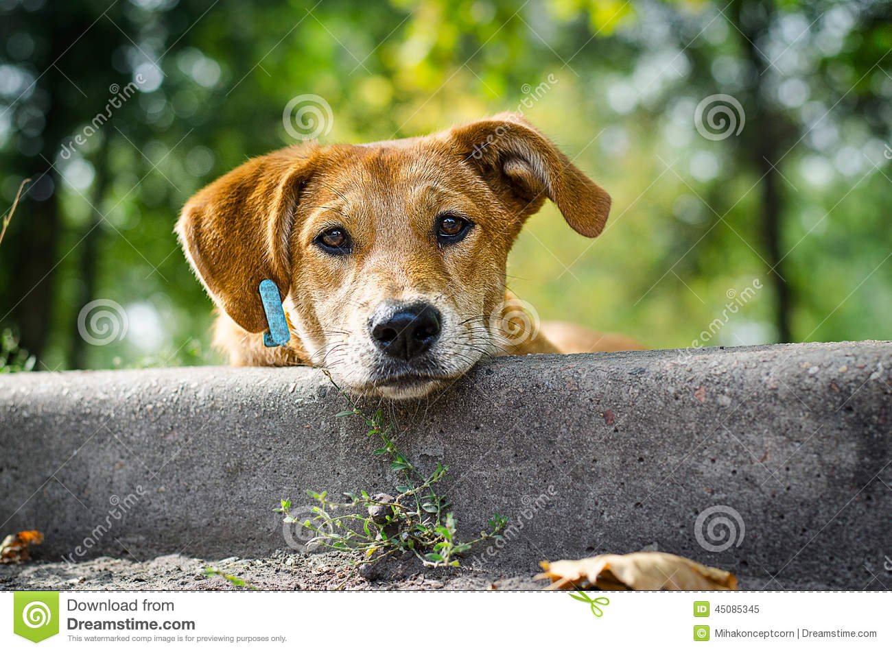 Stray Dog with Sad Eyes Stock Photo - Image: 45085345