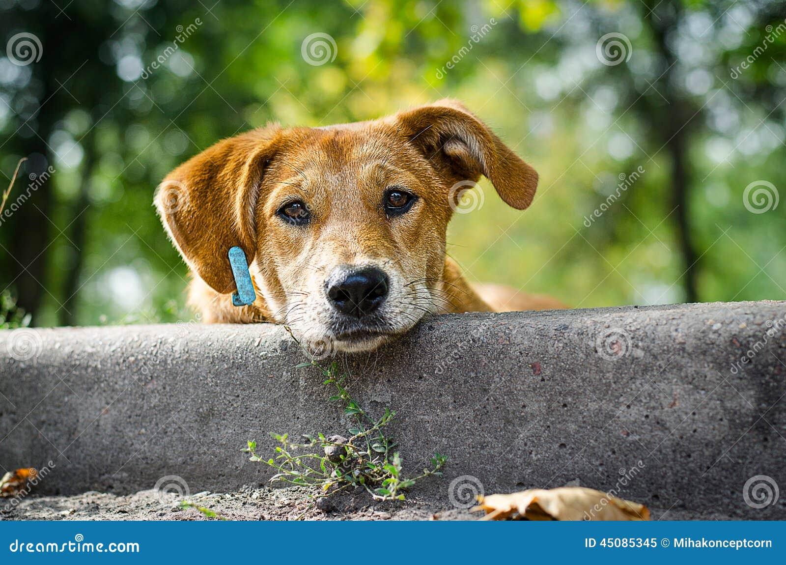 Stray Dog with Sad Eyes Stock Photo - Image: 45085345