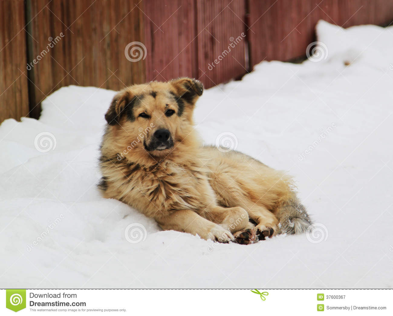 Stray Dog With Sad Eyes Royalty Free Stock Photography ...