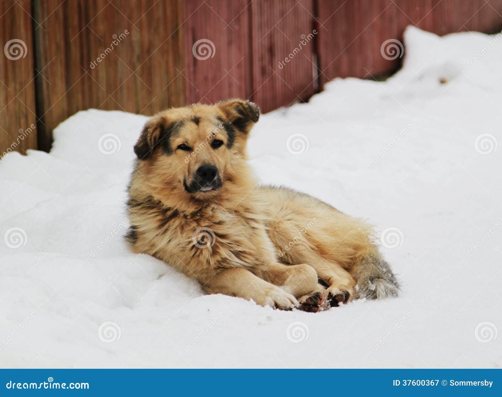Stray Dog With Sad Eyes Royalty Free Stock Photography ...