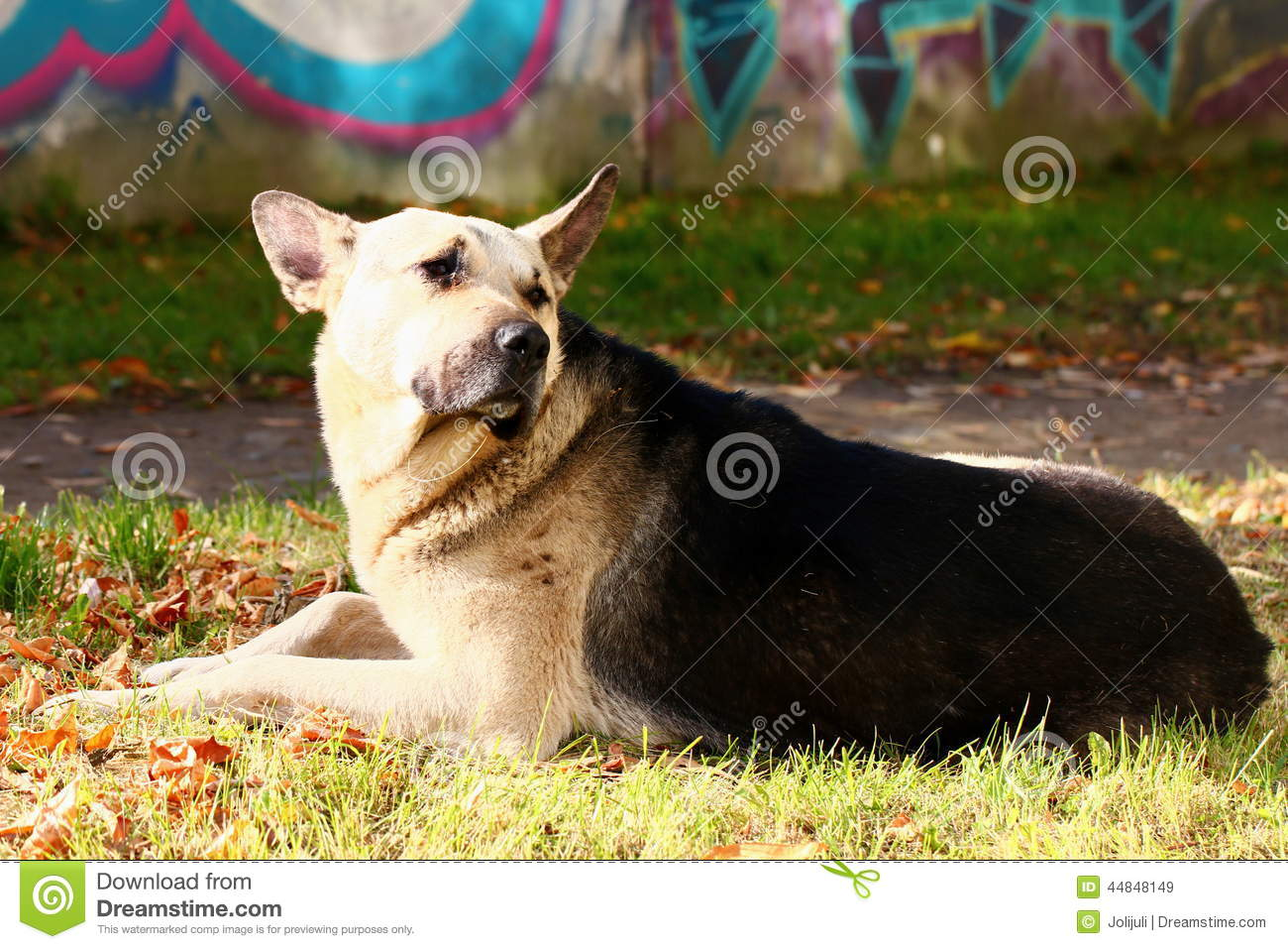 Stray Dog Stock Photo - Image: 44848149
