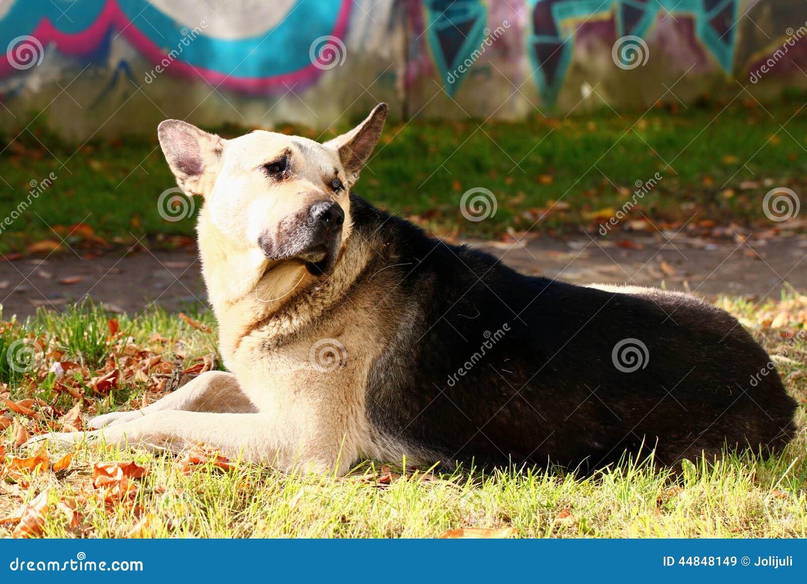 Stray Dog Stock Photo - Image: 44848149