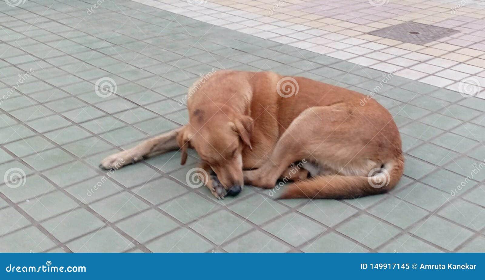 Stray Dog Sleeps Peacefully Stock Image - Image of india