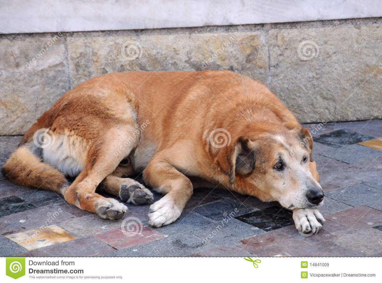 Stray Dog In The Street Royalty Free Stock Images - Image ...