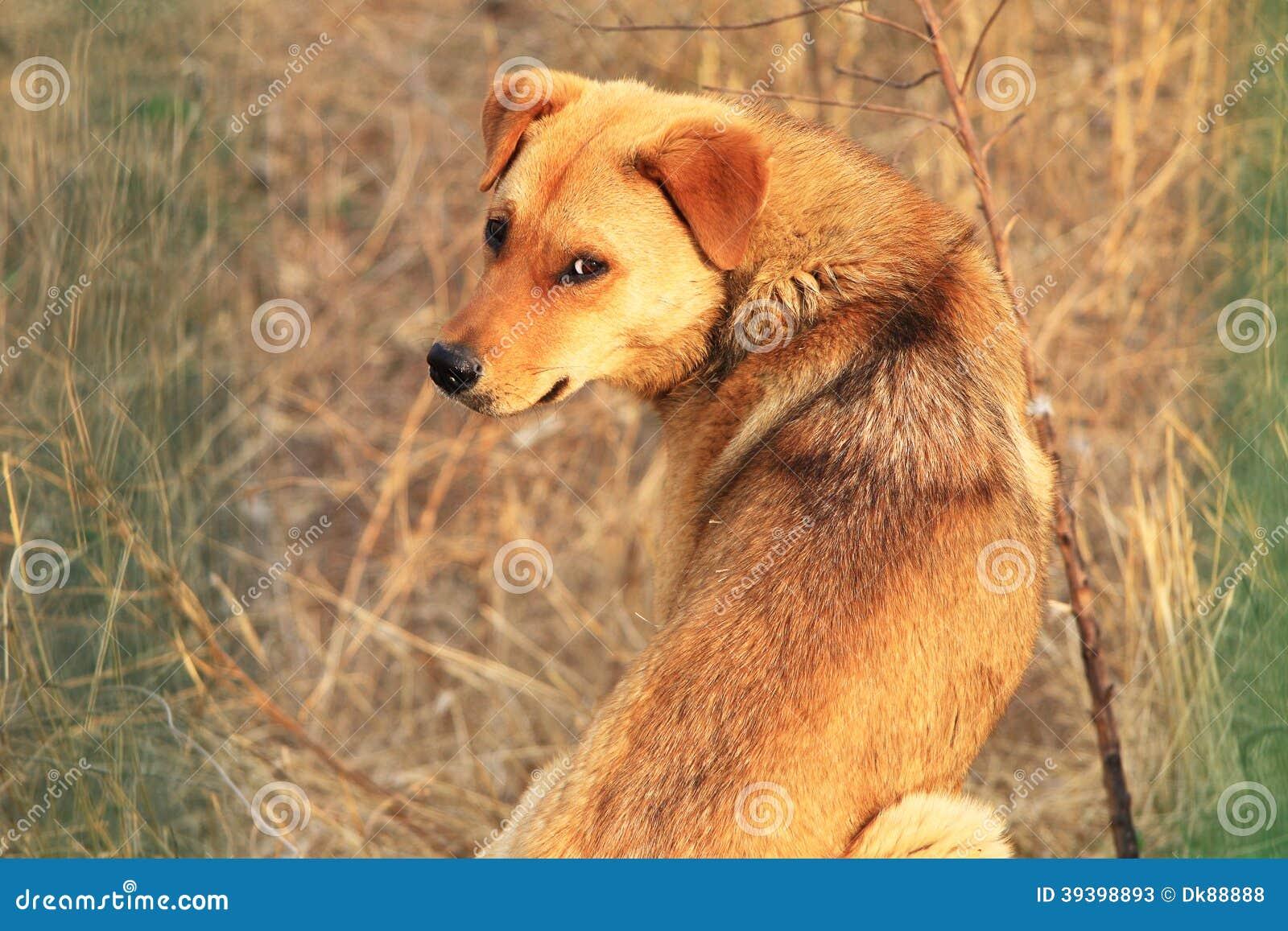 how to help a traumatized dog
