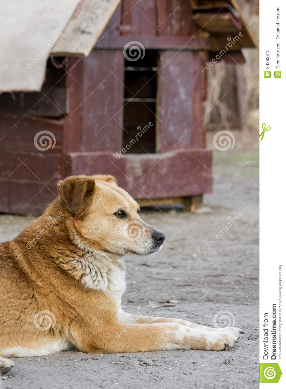 Stray Sad Dog Royalty Free Stock Photo - Image: 24882875