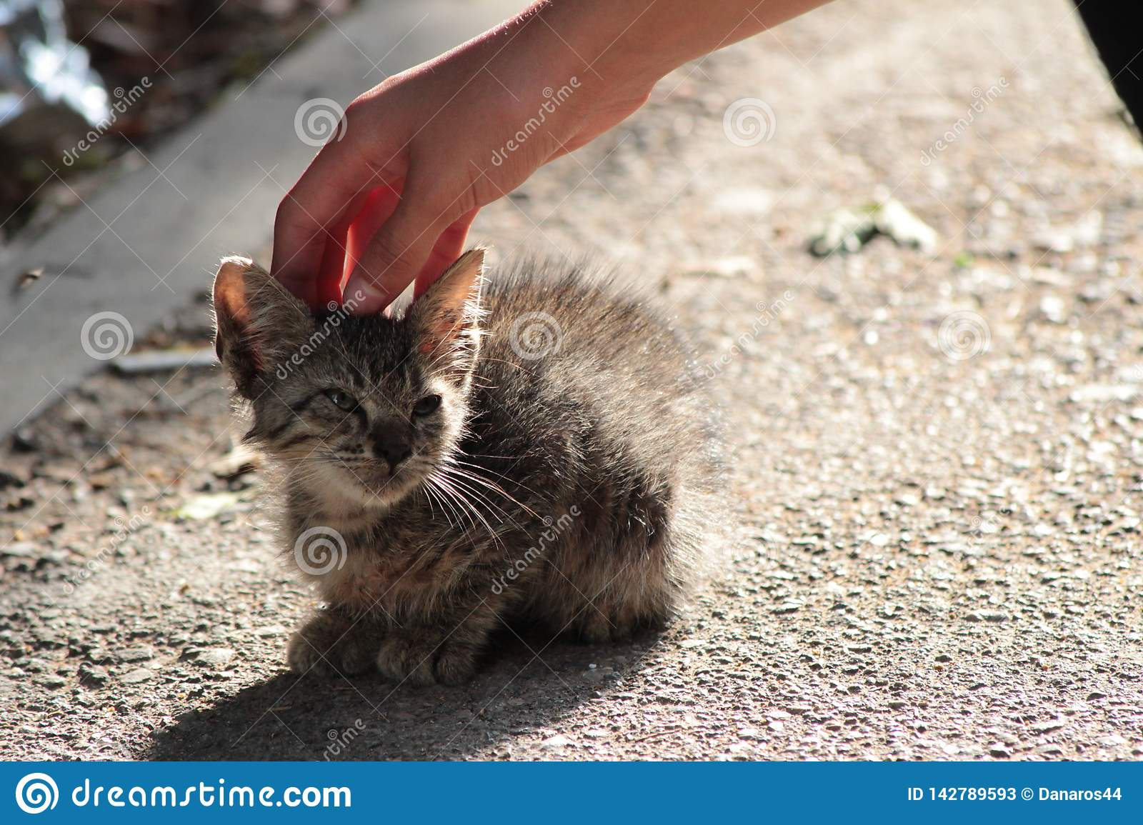 Stray kitty in the street