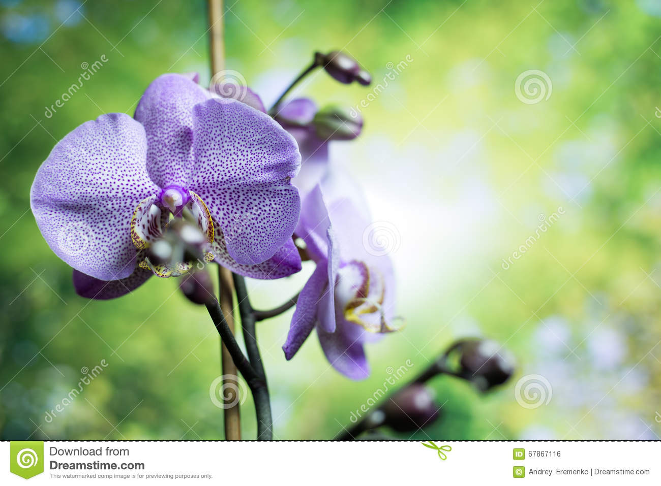 Streaked orchid flowers beautiful orchid flowers orchids purple streaked orchid flowers beautiful orchid flowers orchids purple beautiful purple orchid flower izmirmasajfo