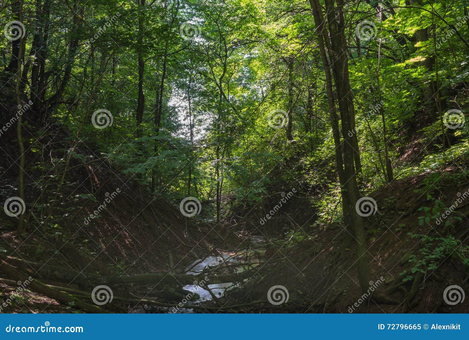 stream dark