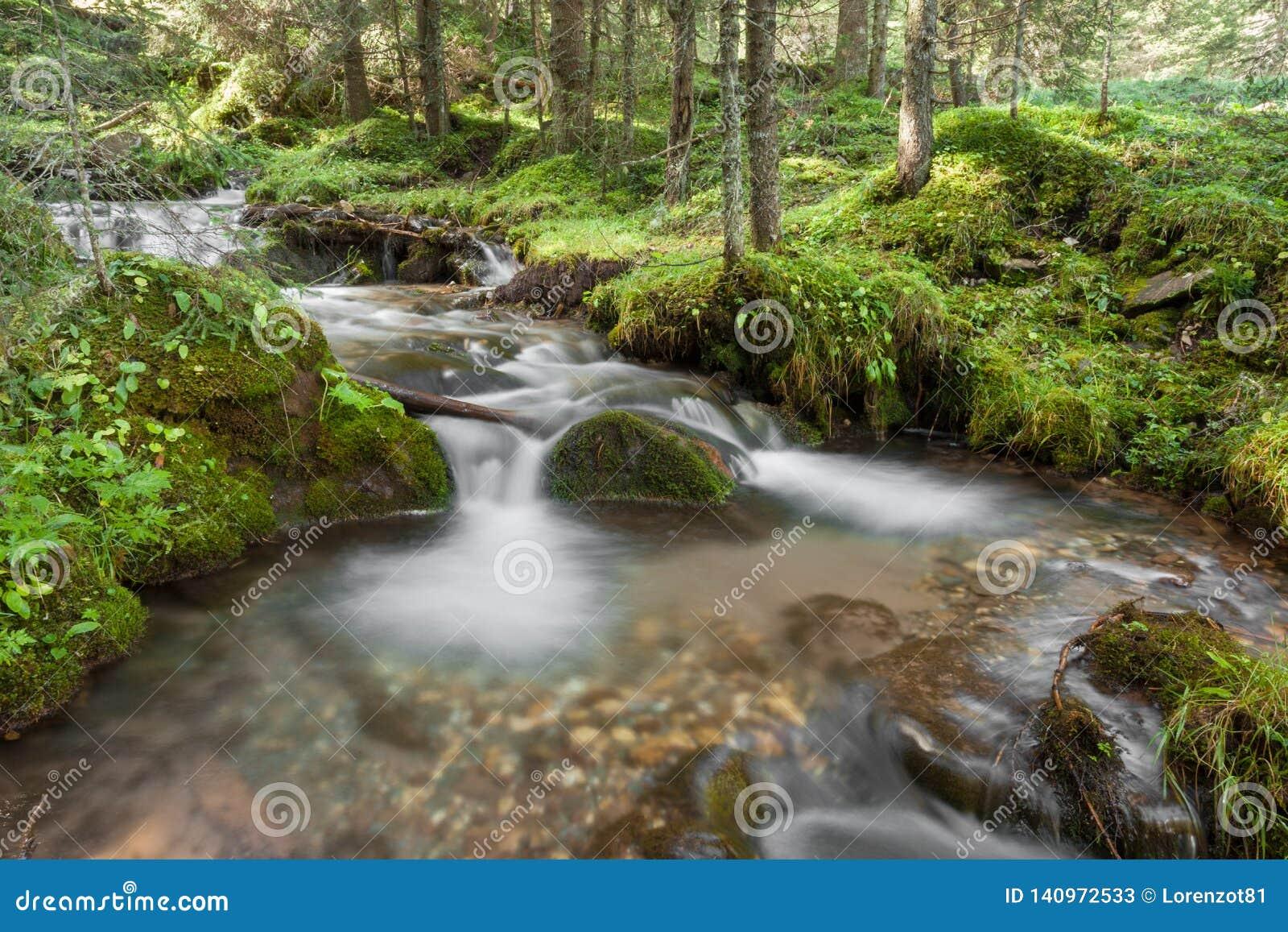 A stream flows inside the woods in Alto Adige