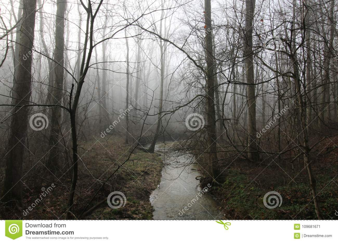 Stream On A Foggy Day In The Forest Stock Image - Image of foggy