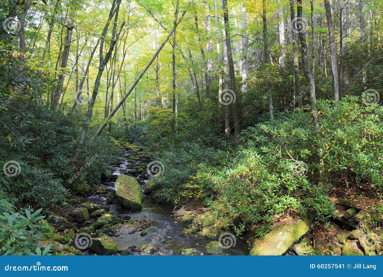 Stream in Joyce Kilmer Forest in North Carolina