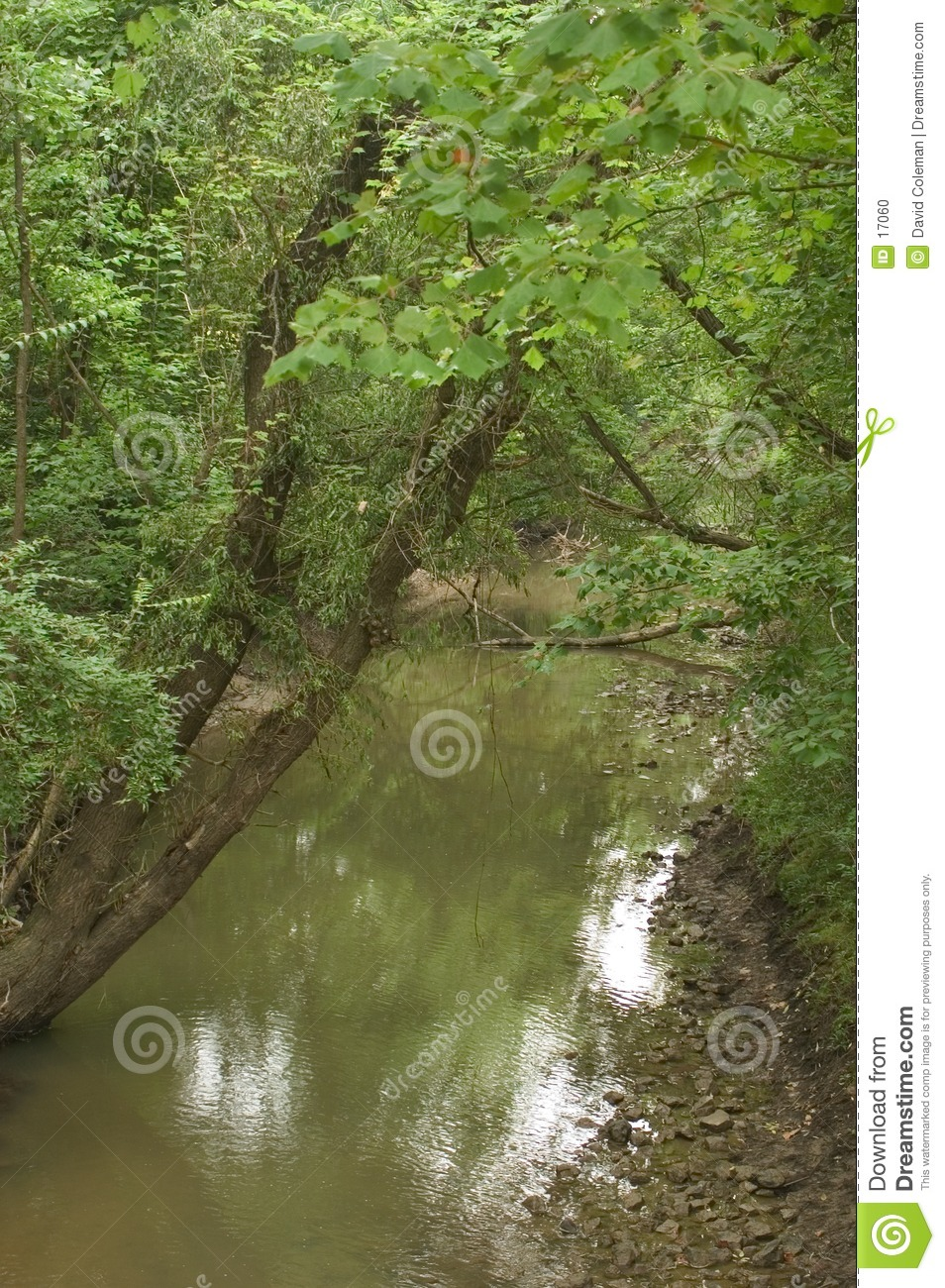 Stream with Leaning Tree