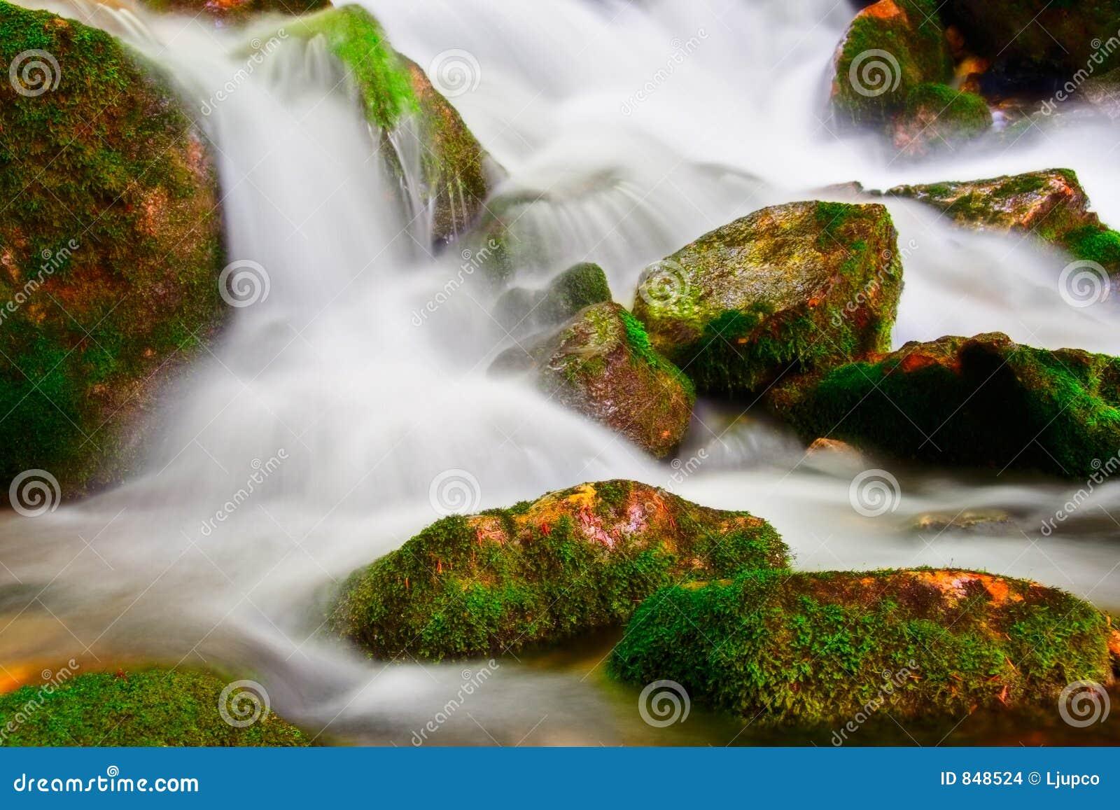 Stream in national park Mavrovo