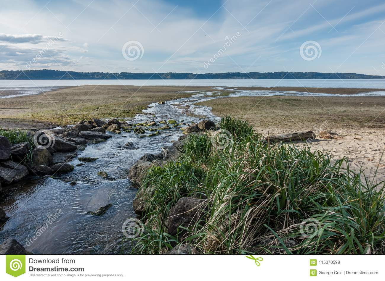Stream And Shoreline