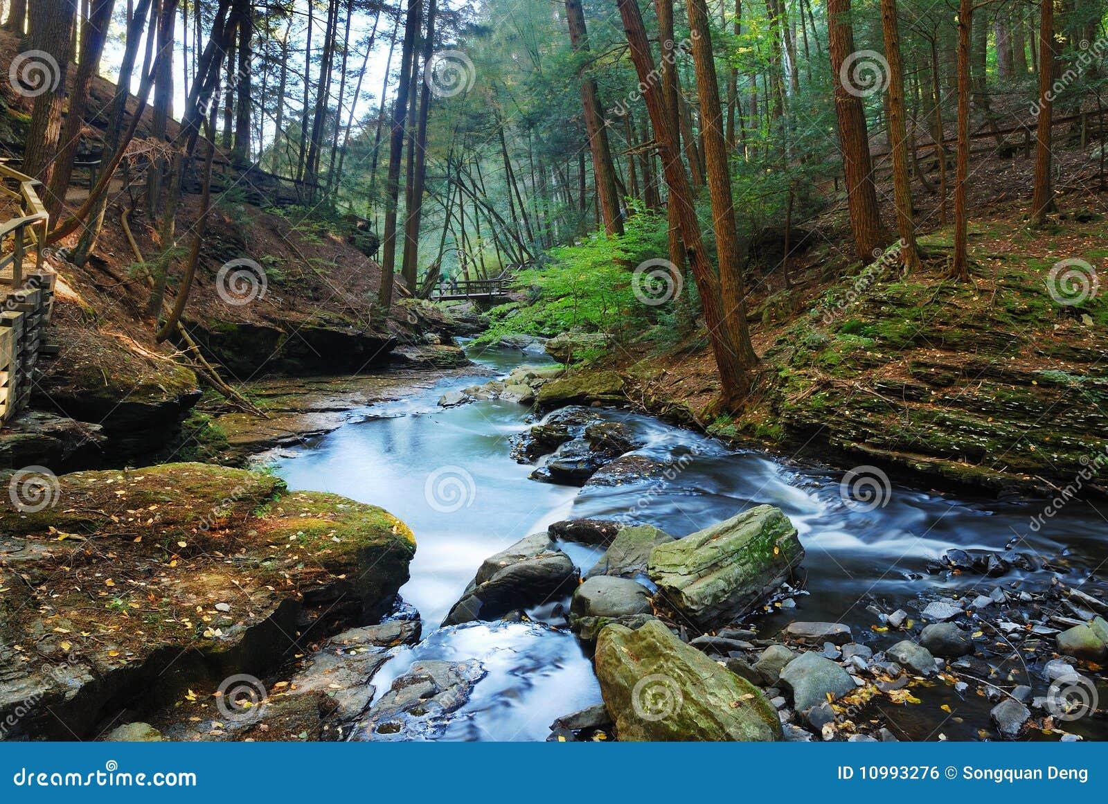 Hidden In The Woods Stream