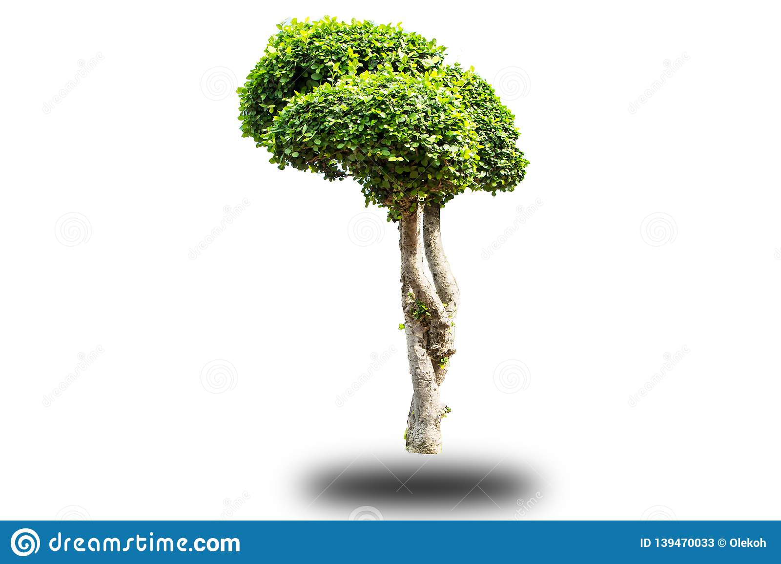 Artistic dwarf of green tree isolated on white background