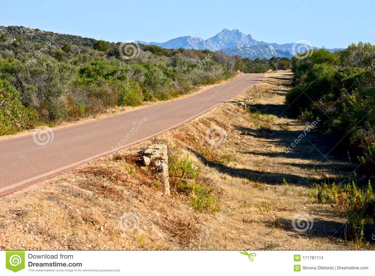 Wild nature landscape with a road