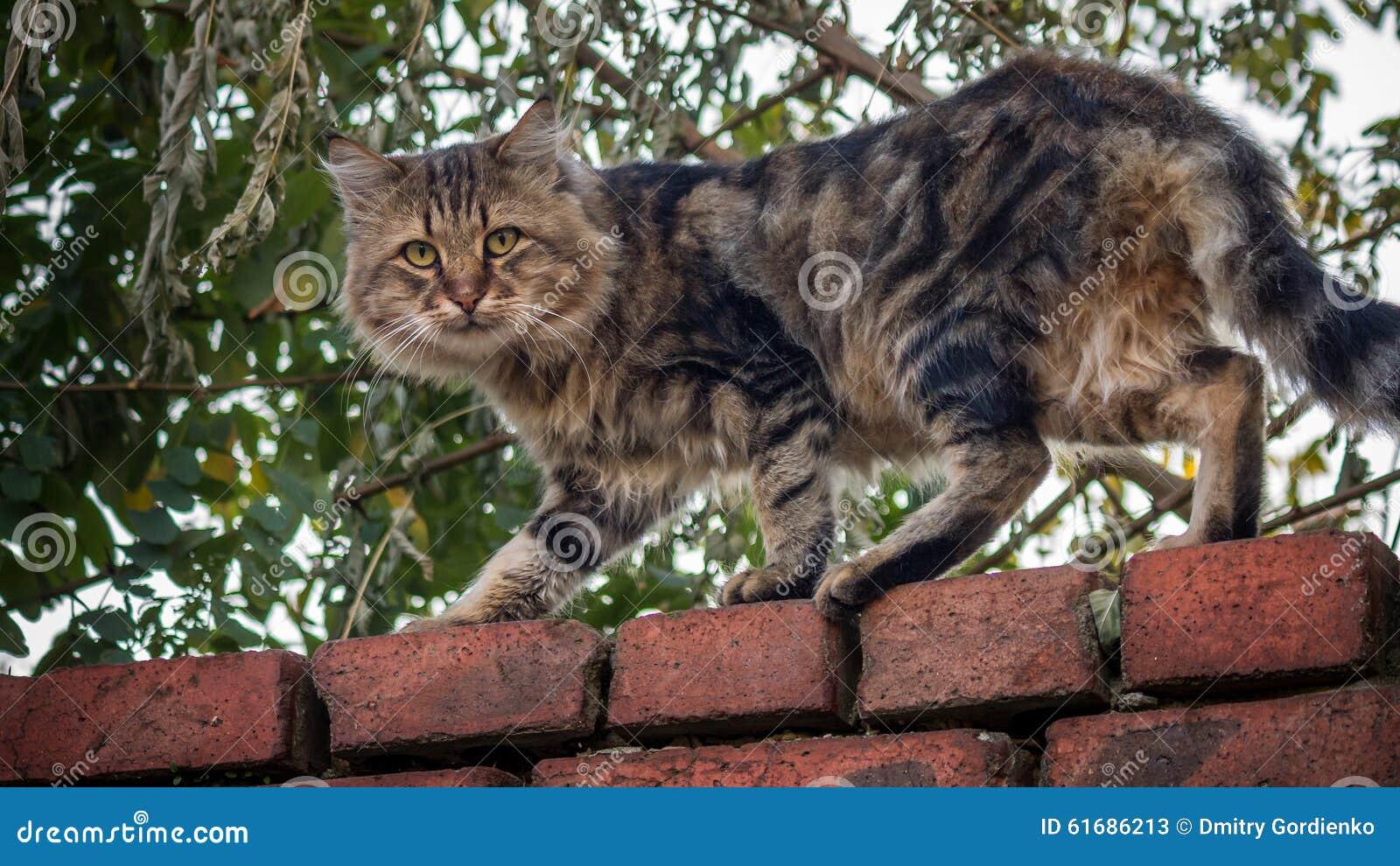 kitty cats cartoon