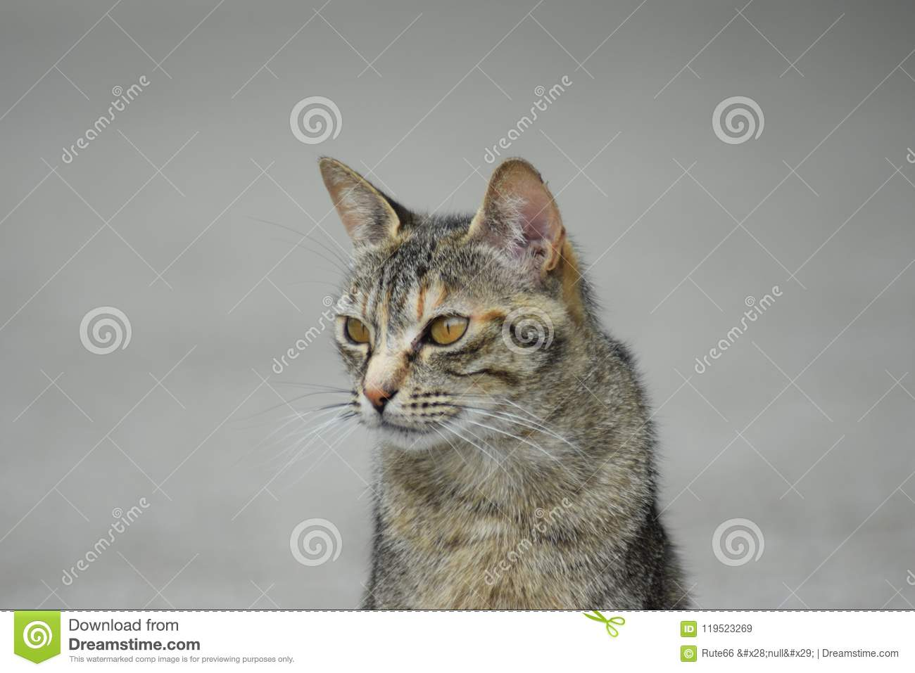 Street Cats - A Day In The Life Of The Survivors Stock Image