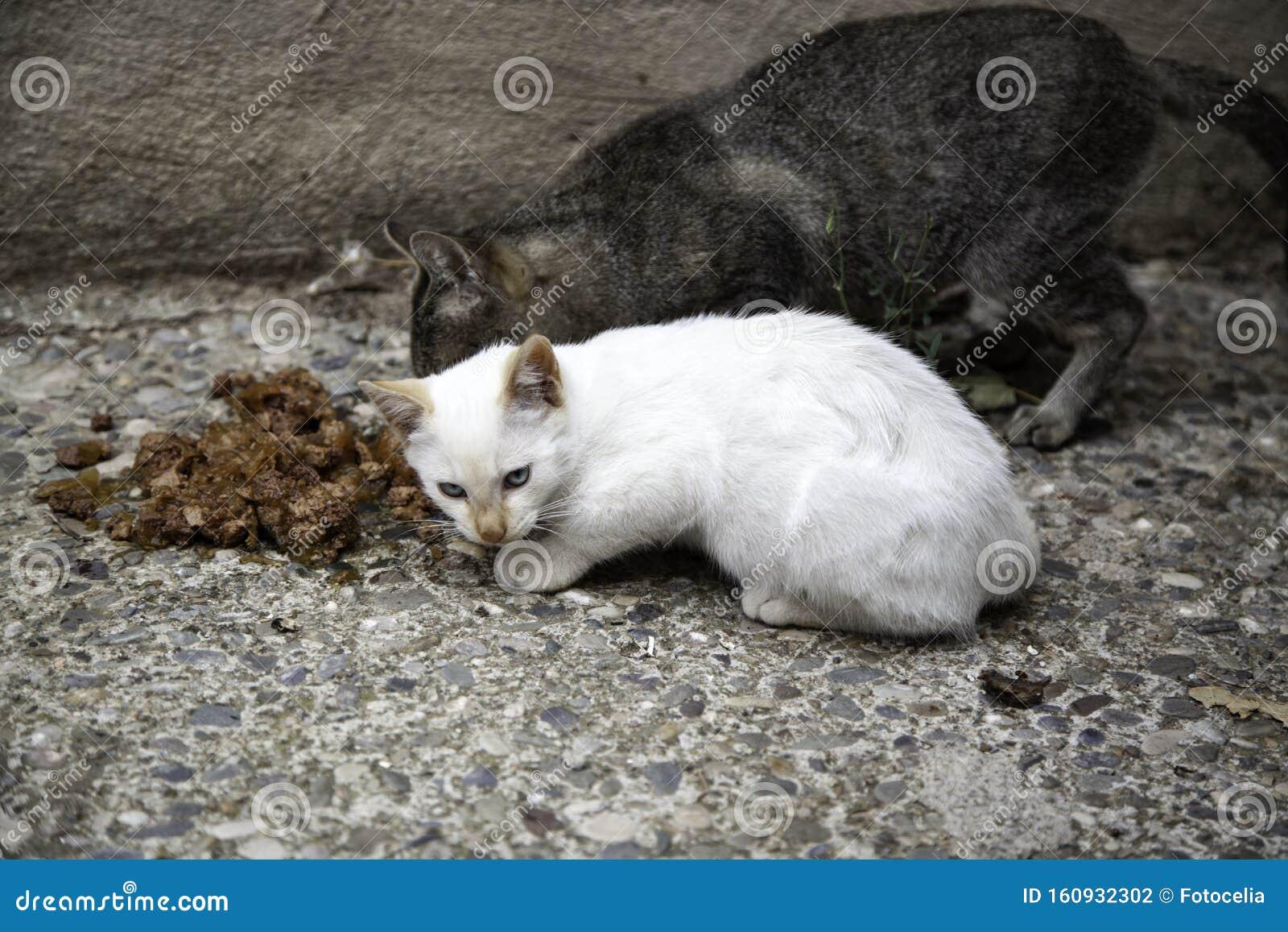 Street cats eating stock photo. Image of animal, playful ...