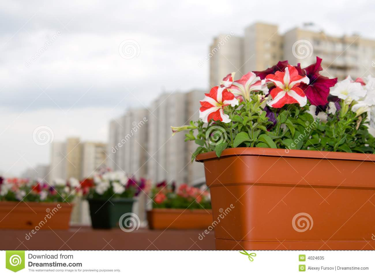 Street decoration with flowers