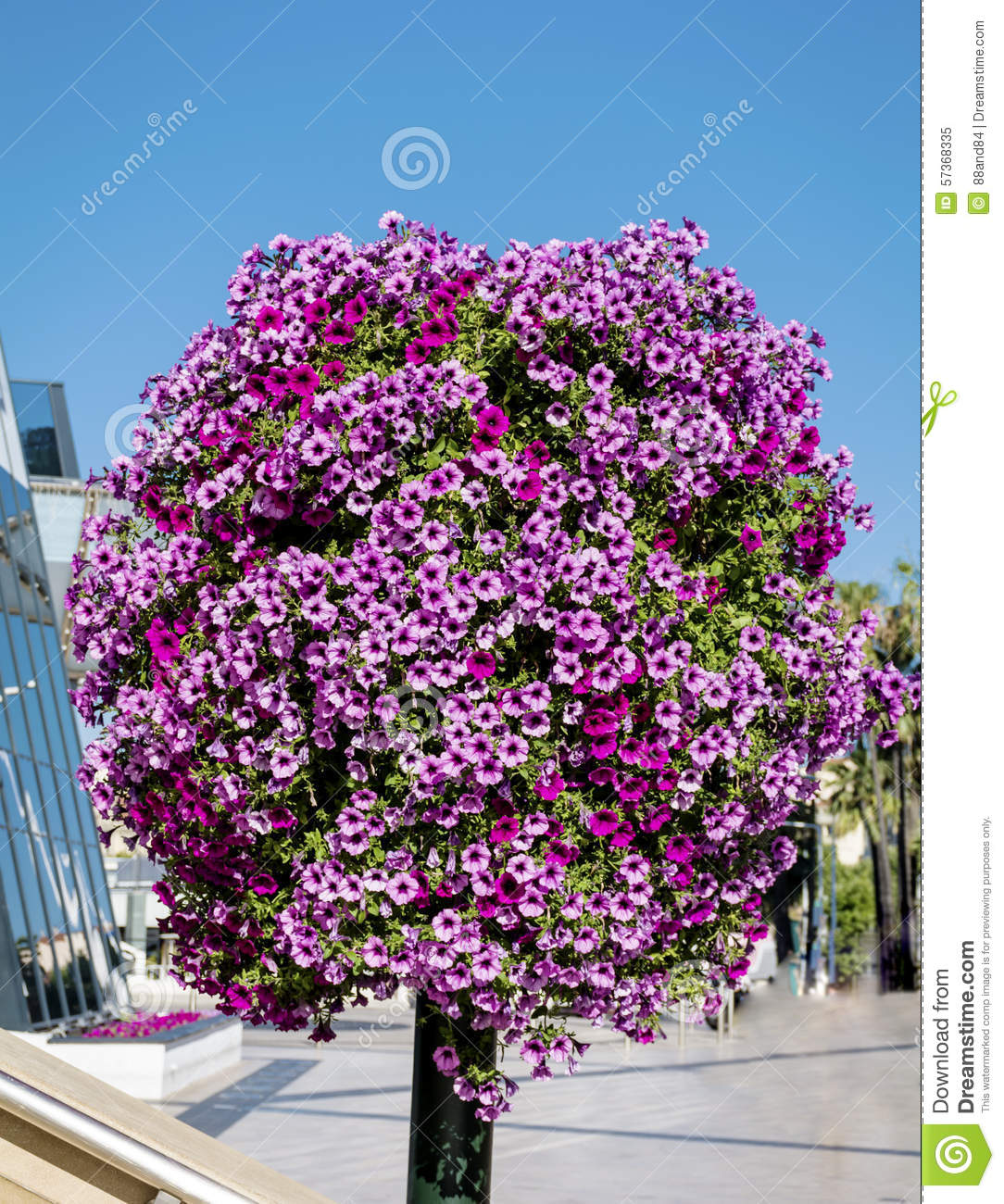 Street light with colorful hanging petunia flower baskets for Colorful hanging planters