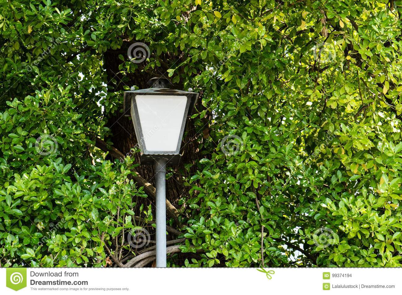 Street light pole surrounded by a tree with leaves