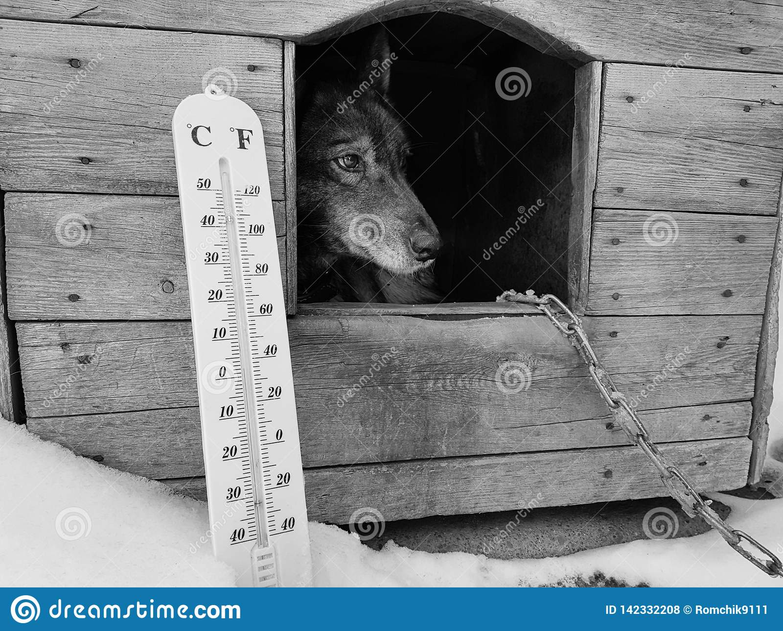 Street thermometer with a temperature of Celsius and Fahrenheit and a dog breed Laika in a doghouse