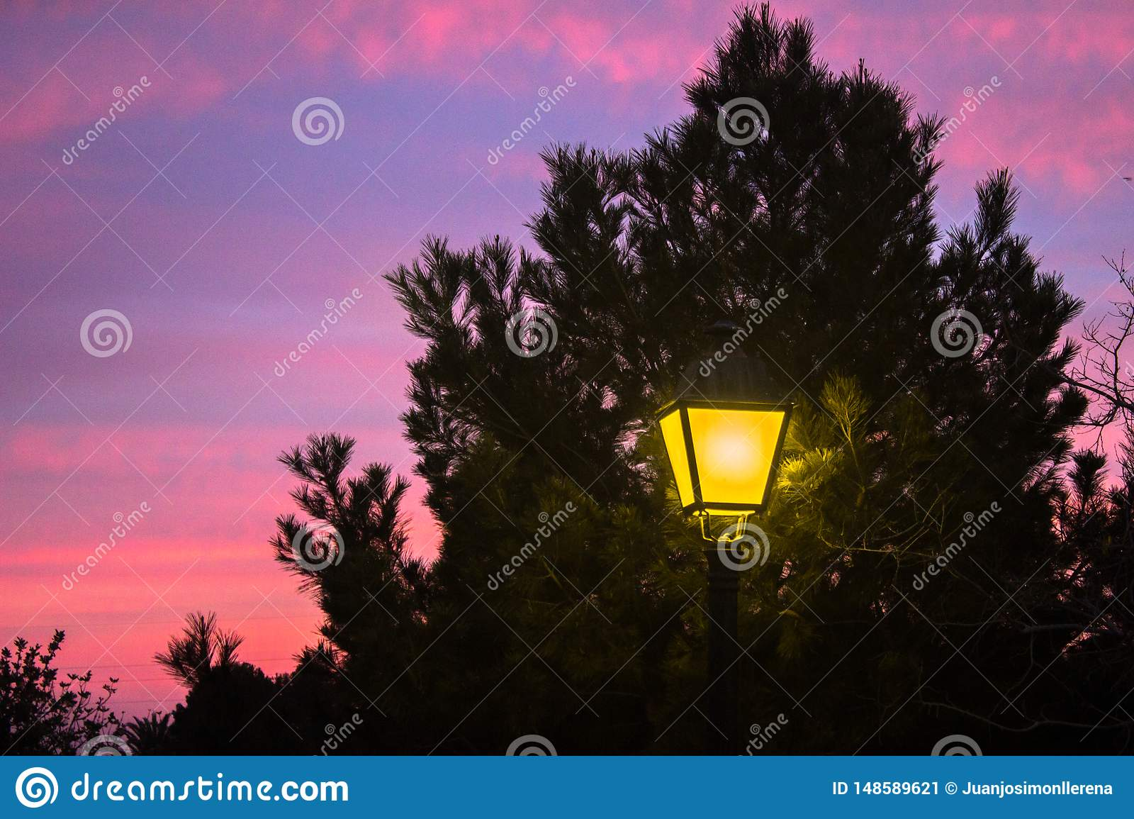 Streetlight shining under a tree