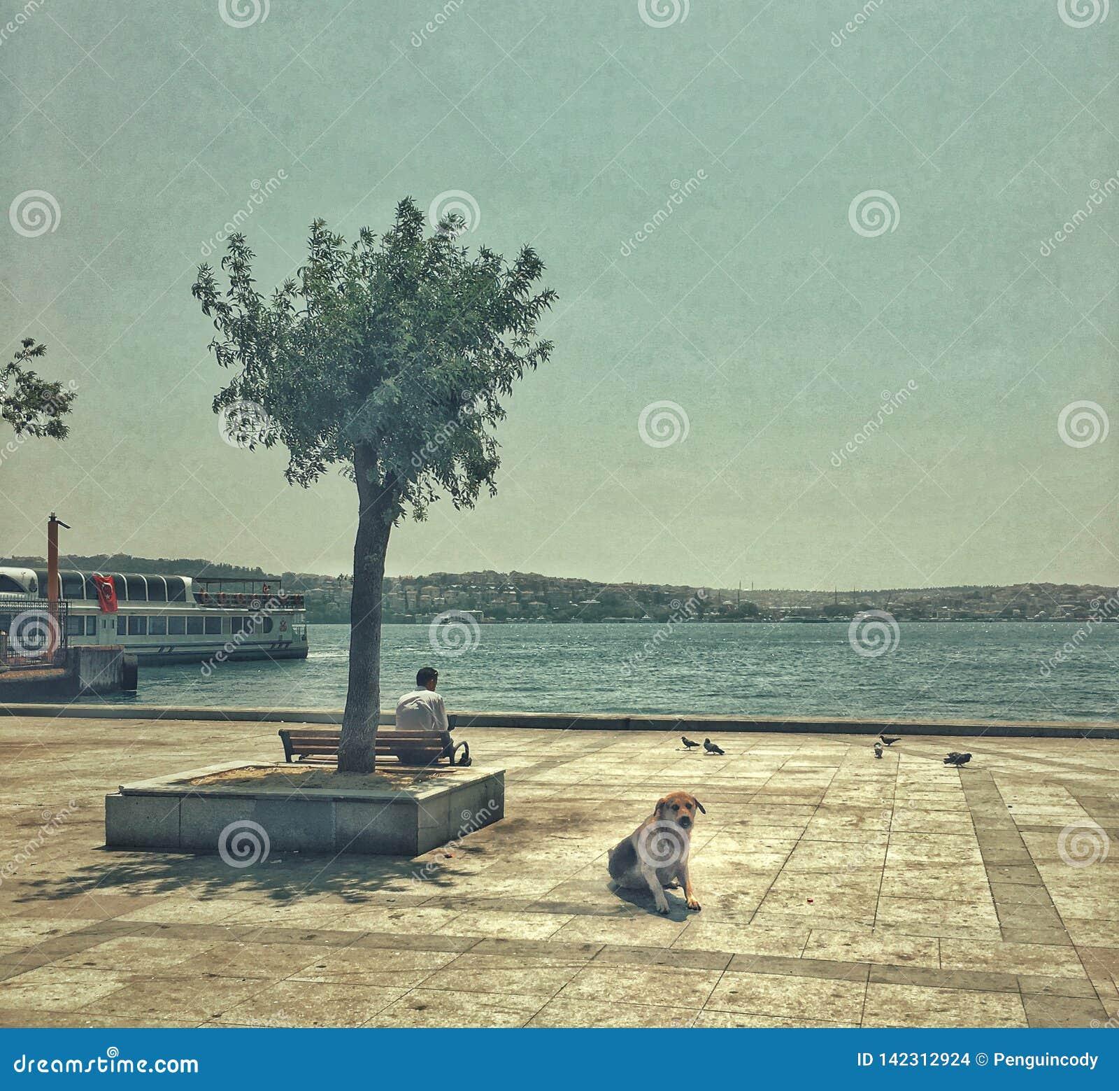Streetphotography w Istanbuł, Turcja