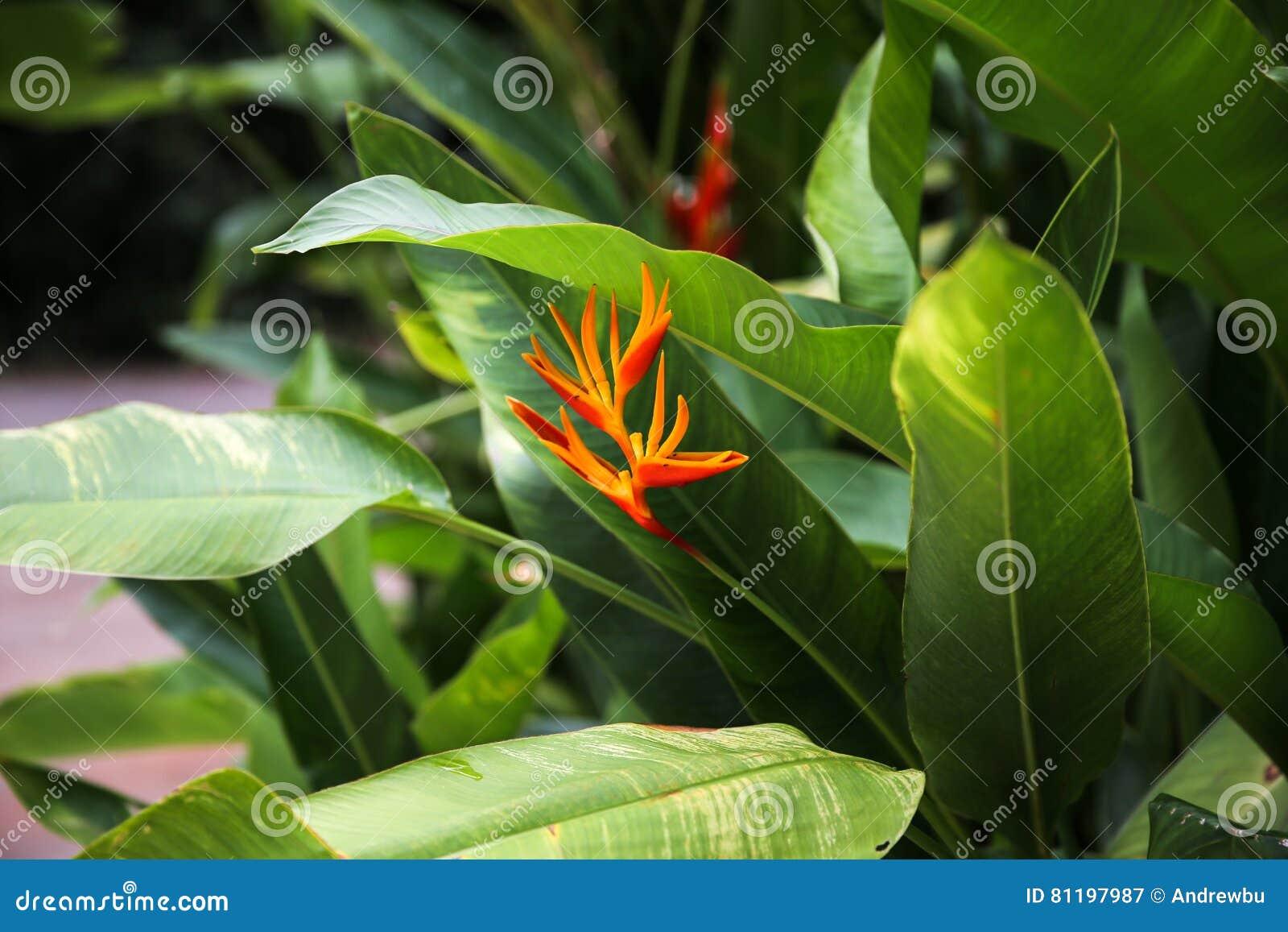 Strelitzia De Fleur Paradis D Oiseau Image Stock Image Du